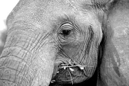 Slonovi i elita imaju nesto zajednicko