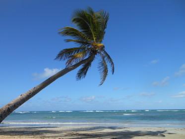 Reclama la Bounty: Mare, soare, cocotier